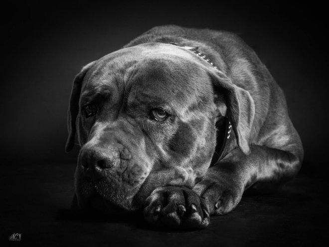 animaux_02_ac-ltdr-bayeux-photographe