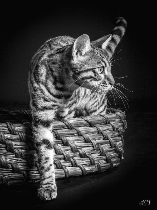 animaux_10_ac-ltdr-bayeux-photographe